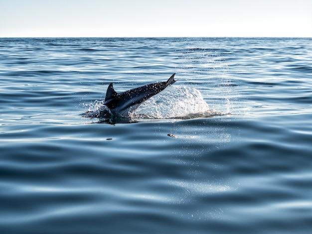Delphin, der im plätschernden meerwasser mit spritzer springt