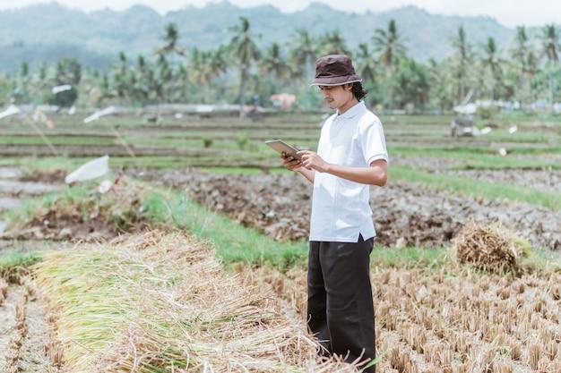 Dem landwirt gehören die reisfelder, die eine tablette halten, um den ertrag gegen das reisfeld zu berechnen