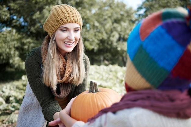 Den perfekten kürbis für halloween auswählen