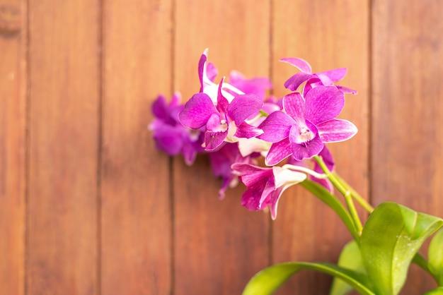 Dendrobium, lila orchidee, orchidee auf unscharfem holzhintergrund, abstrakte blume lila farbe auf unscharfem hintergrund, makro Premium Fotos
