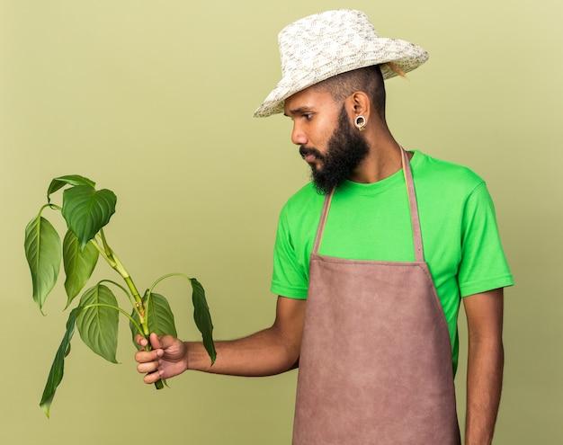 Denkender junger gärtner afroamerikanischer mann mit gartenhut, der plante isoliert auf olivgrüner wand hält und betrachtet