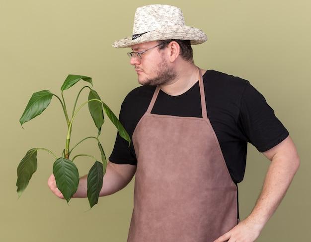 Denkender junger männlicher gärtner, der gartenhut hält und pflanze betrachtet, die hand auf hüfte lokalisiert auf olivgrüner wand setzt