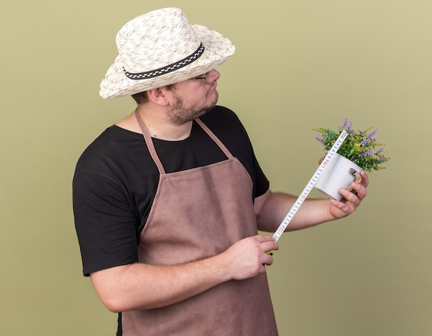 Denkender junger männlicher gärtner, der gartenhut trägt, der blume im blumentopf mit maßband misst, das auf olivgrüner wand lokalisiert wird