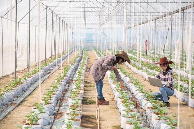 Der agronom untersucht die auf dem hof wachsenden melonensämlinge, landwirte und forscher bei der analyse der pflanze.