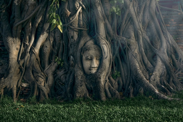 Der alte buddha-kopf unter dem baum im alten tempel in phra nakhon si ayutthaya, thailand