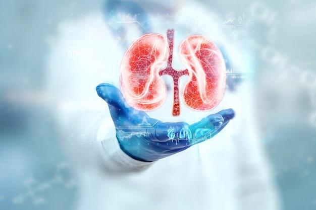 Der arzt schaut sich das nierenhologramm an, überprüft das testergebnis auf der virtuellen oberfläche und wertet die daten aus. nierenerkrankungen, steine, innovative technologien, medizin der zukunft.