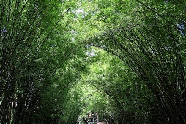 Der bambuswald in der natur in thailand