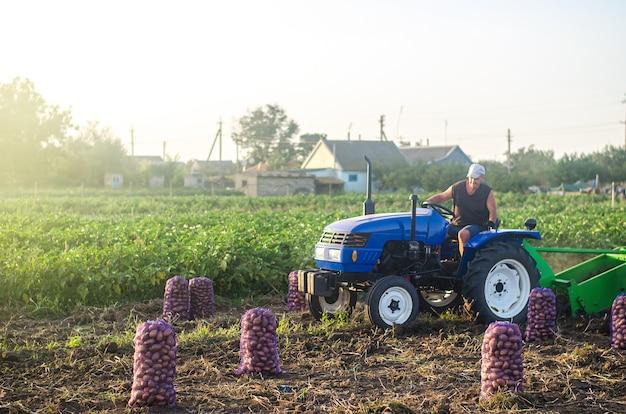 Der bauer auf einem traktor fährt über das feld und erntet kartoffeln. landwirtschaft und ackerland