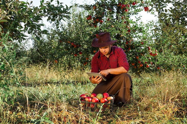 Der bauer sammelt reife äpfel im garten