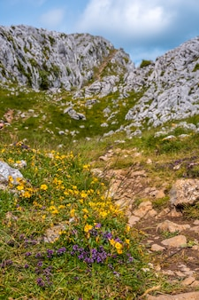 Der berg aizkorri ist 1523 meter hoch und der höchste in guipuzcoa. baskenland. gelbe blüten oben oben. steigen sie durch san adrian und kehren sie durch die oltza-felder zurück