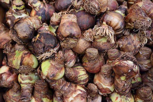 Der berühmte amsterdamer blumenmarkt (bloemenmarkt). zwiebeln der iris.