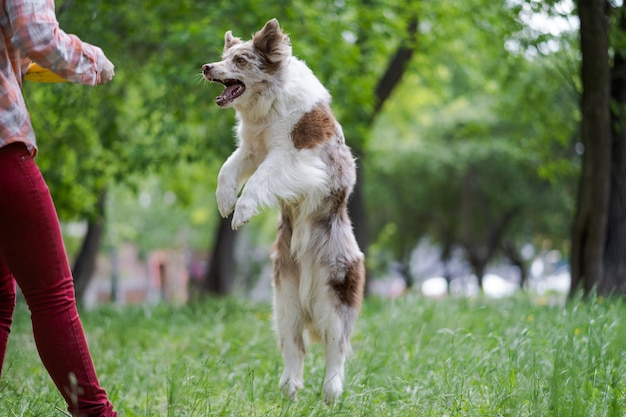 Der besitzer spielt mit seinem hund auf dem grünen gras im park. lustige spaziergänge mit haustieren. glück und freude.