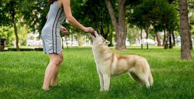 Der besitzer trainiert den husky-hund im park