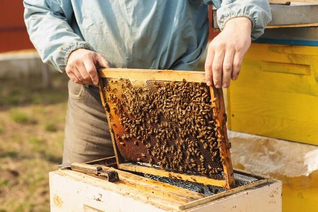 Der bienenraucher wird verwendet, um bienen vor dem entfernen des rahmens zu beruhigen
