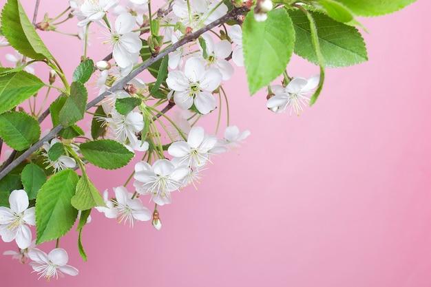Der blühende zweig auf einem rosa hintergrund, frühling