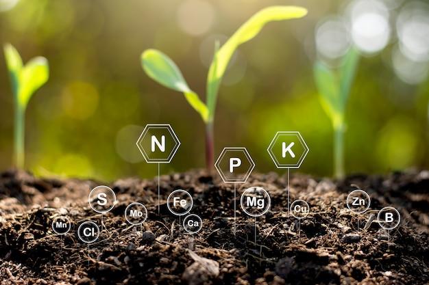 Der boden ist reich an mineralien und verschiedenen nährstoffen für den anbau.