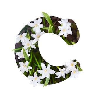 Der buchstabe c des englischen alphabets der kleinen weißen chionodoxa-blüten