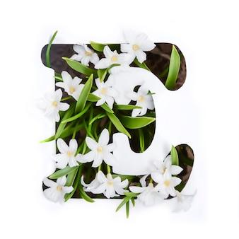Der buchstabe e des englischen alphabets der kleinen weißen chionodoxa-blüten