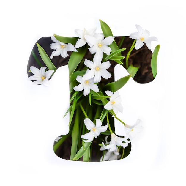 Der buchstabe t des englischen alphabets der kleinen weißen chionodoxa-blüten