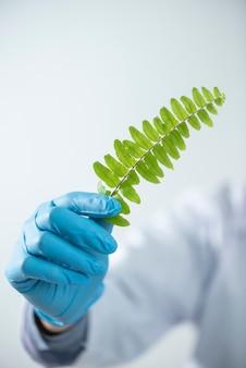 Der doktorfrauenwissenschaftler, der kräutermedizin im labor mit kraut macht, verlässt mineralalternativbehandlungsforschung der vitaminergänzungen