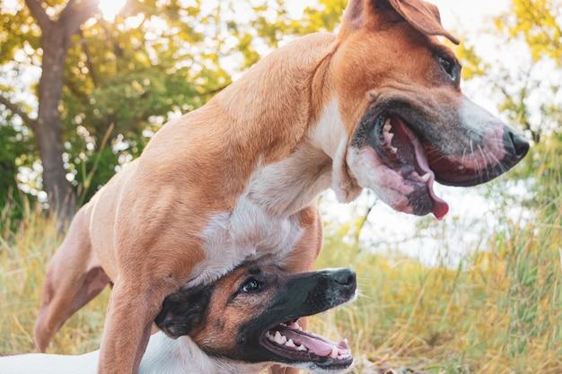 Der erwachsene hund steht schützend neben seinem welpenbegleiter
