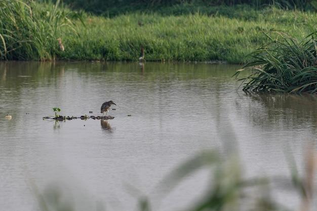 Der feuchtgebietspark ist ökologisch gut. vögel wie reiher jagen es.