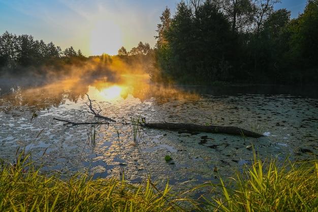 Der fluss ist bei sonnenaufgang mit morgennebel bedeckt, umgeben von einem dichten grünen wald. wilde natur. aktive wochenendferien wilde natur im freien.