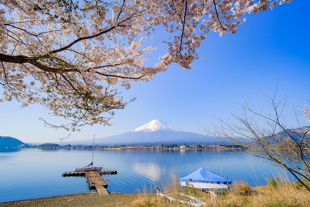 Der fujisan mit schneebedecktem, blauem himmel und schöner kirschblüte