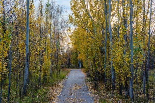 Der fußweg der stadtstraße übersät mit gefallenen gelben, orangefarbenen und roten blättern. herbstlandschaft.