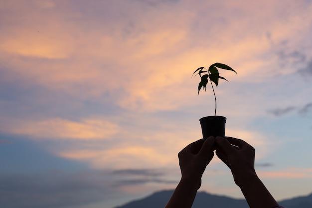 Der gärtner hebt den topf der pflanze zum himmel