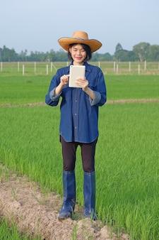 Der ganze körper einer asiatischen bäuerin, die auf einer grünen reisfarm ein smartphone-tablet steht und hält