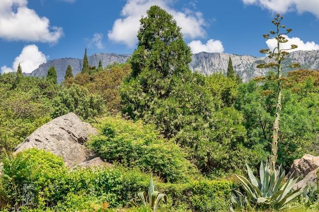 Der garten des vorontsov-palastes mit blick auf den berg aipetri blühende agave crimea