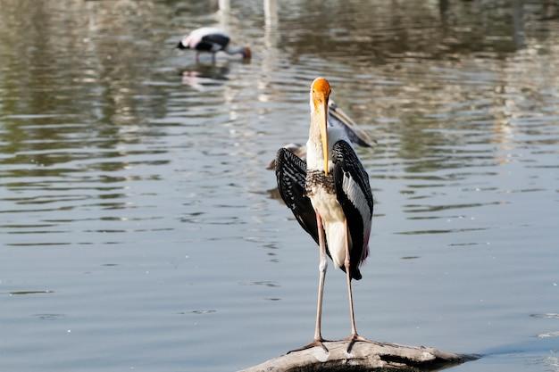 Der gemalte storchvogel steht auf dem holzstab im wasser