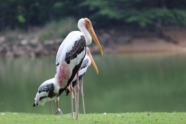 Der gemalte storchvogel steht im gras mit einem see im hintergrund