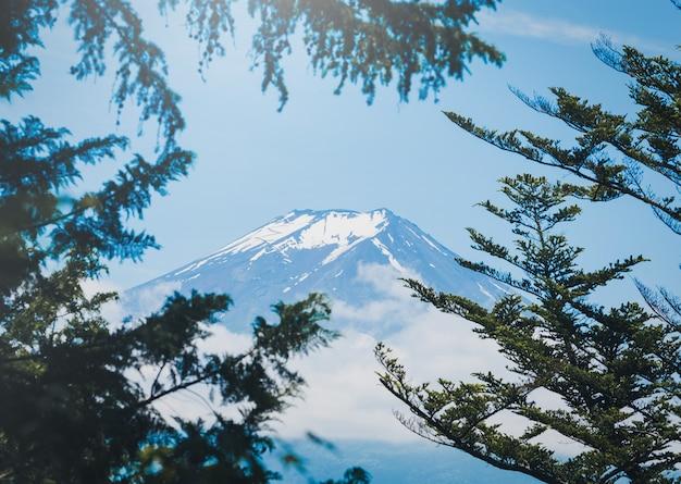 Der gipfel des berges fuji zwischen wolke mit grünem blatt im frühjahr auf tageszeit in fujiyoshida