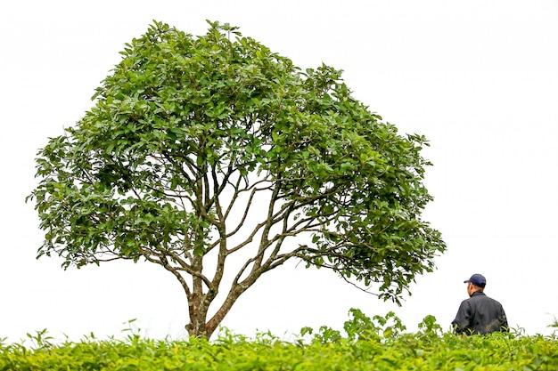 Der grüne baum am berg mit einem mann, der unter den bäumen sitzt.