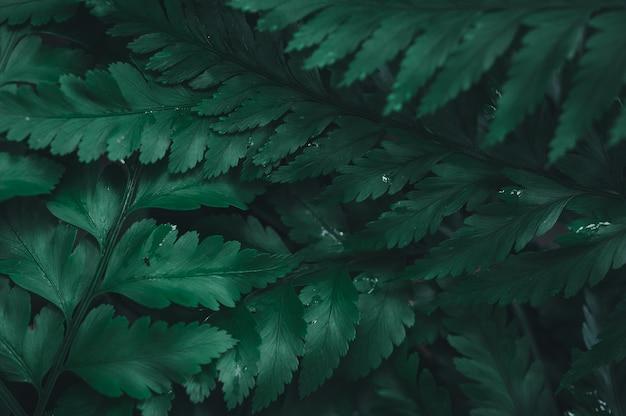 Der grüne blatthintergrund zeigt die liebe zur natur und zur umwelt