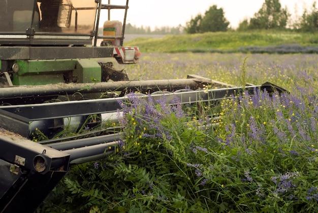 Der harvester schneidet luzerne nahaufnahme von messern des erntemechanismus