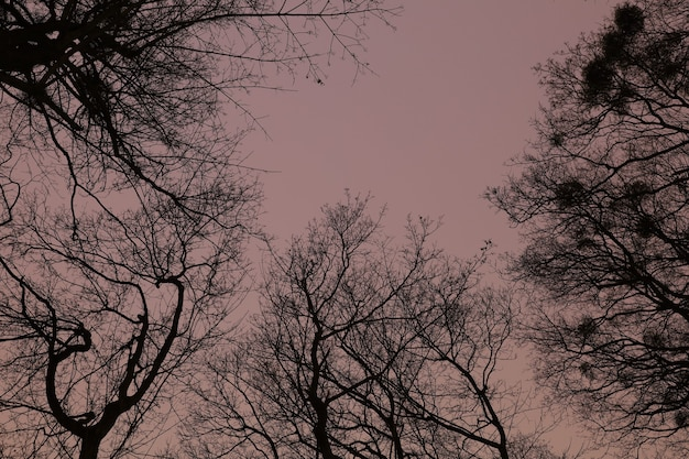 Der himmel im nächtlichen winterwald