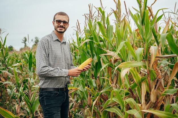 Der hübsche agronom hält einen tablet-touchpad-computer im maisfeld und untersucht die ernte vor der ernte