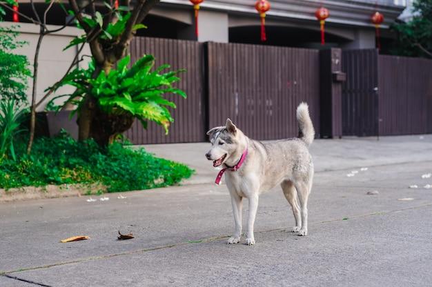 Der hund, der auf der straße vor haus steht