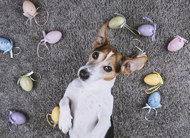 Der hund, der zurück auf grauem teppich mit ostern liegt, malte eier
