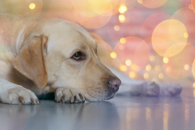 Der hund ist traurig in der weihnachtsnacht