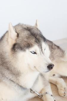 Der hund legt