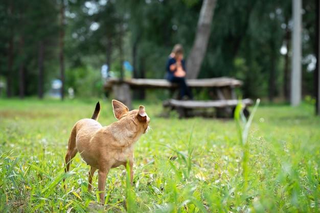 Der hund lief vor dem besitzer davon. pet auf einem spaziergang.