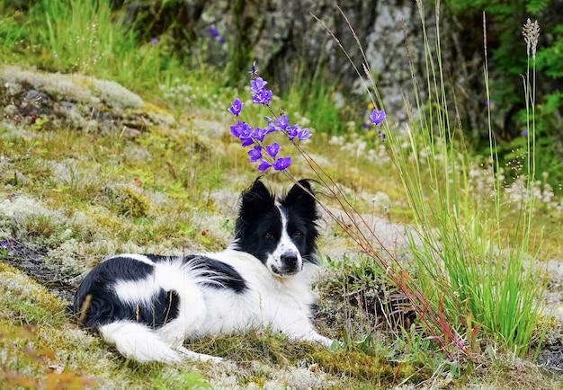 Der hund liegt auf einer wiese mit blumen
