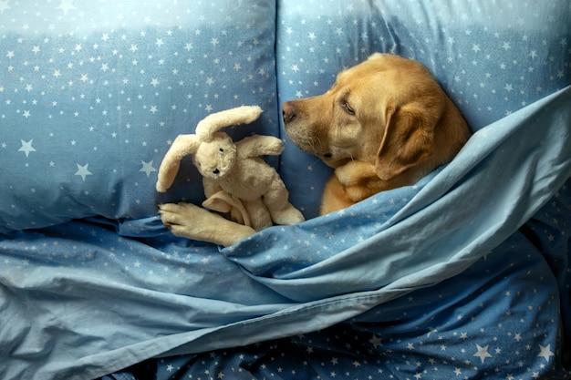 Der hund schläft auf einem bett unter einer decke.