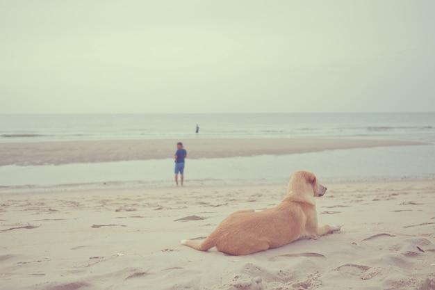 Der hund schlief auf dem sand auf see, relax zeit, hundesitzen