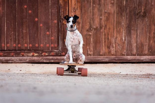 Der hund sitzt auf einem longboard. pet spaziergänge, skateboarden lernen im park. speicherplatz kopieren.