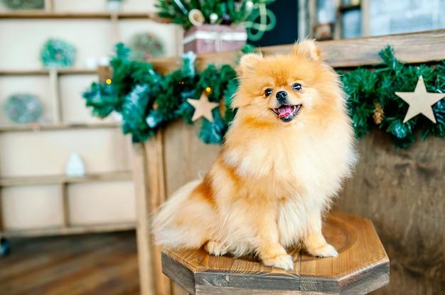 Der hund sitzt auf einem stuhl, weihnachtsbeleuchtung